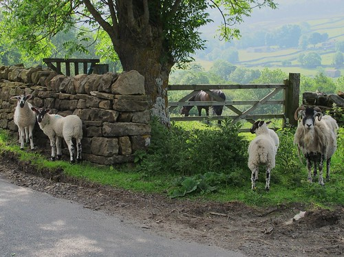 Swaledale in the Yorkshire Dales