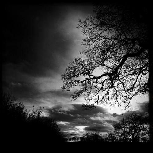england blackandwhite bw tree monochrome mono blackwhite unitedkingdom keele iphone johnslens hipstamatic blackeyssupergrain