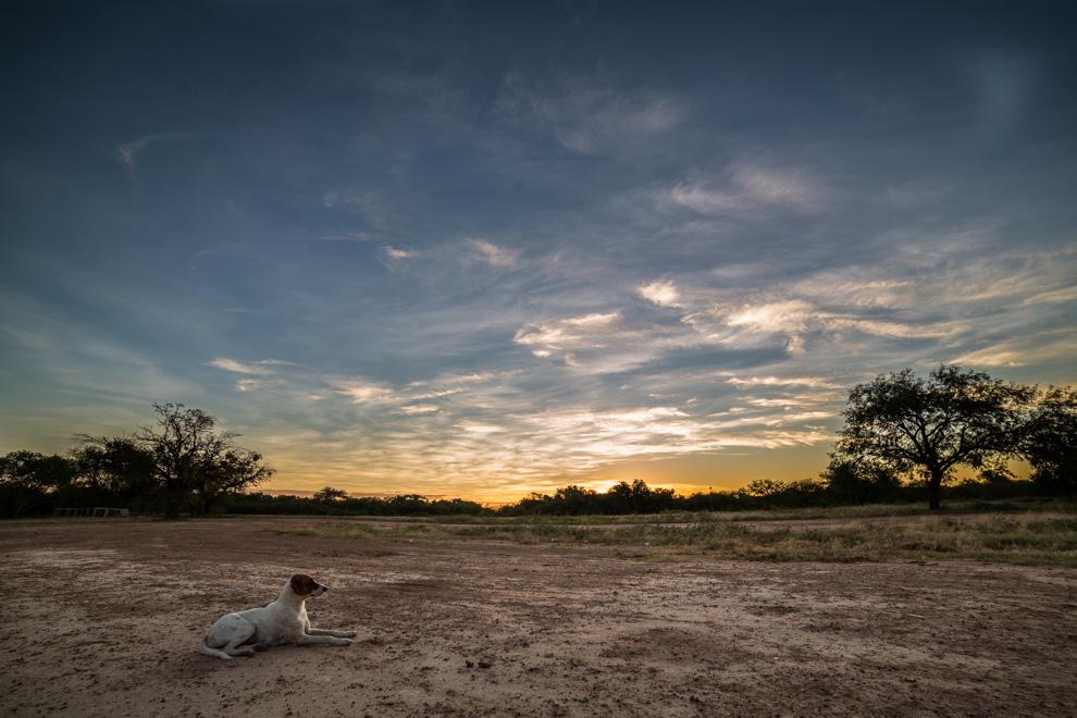 Un perro descansa en el suelo chaqueño mientras caía la noche en el Parque Nacional Defensores del Chaco. (Tetsu Espósito)