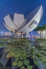 Lotus World