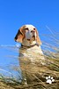 Lucy Beagle | Camber Sands | Pet Photography London