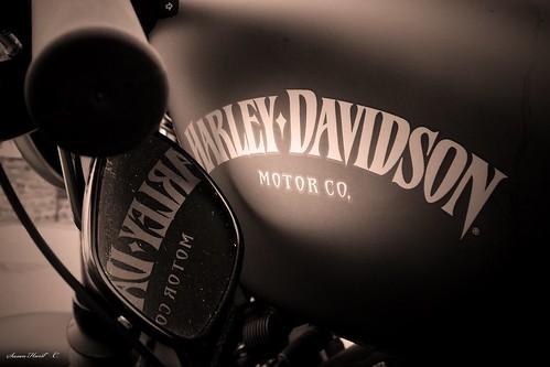 ~ Harley Davidson ~