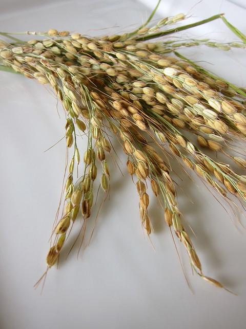 4.7.14 Duborskian Upland Rice