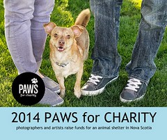 Paws For Charity Art Book Project 2014