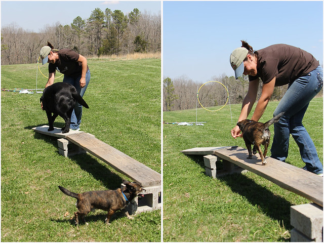 winery-agility-course-6
