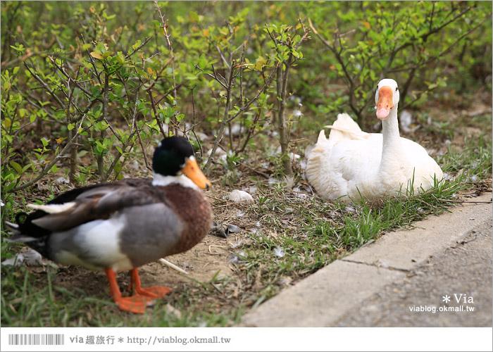 【彰化景點】克林姆莊園Cream Manor~小型動物園!戶外親子同遊好去處20