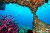 UnderwaterOman