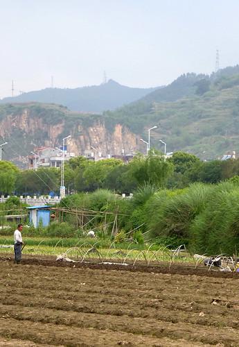 Fujian-Xiapu-Champs (13)