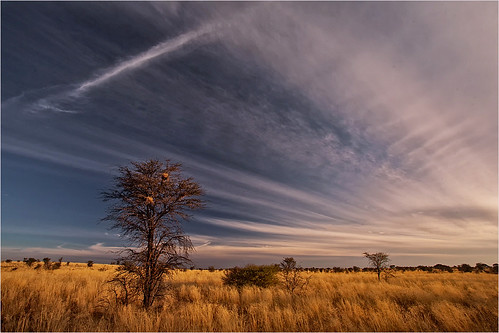 landscapekgalagadiafrica