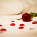 (Be my Valentine) by Wisal 911