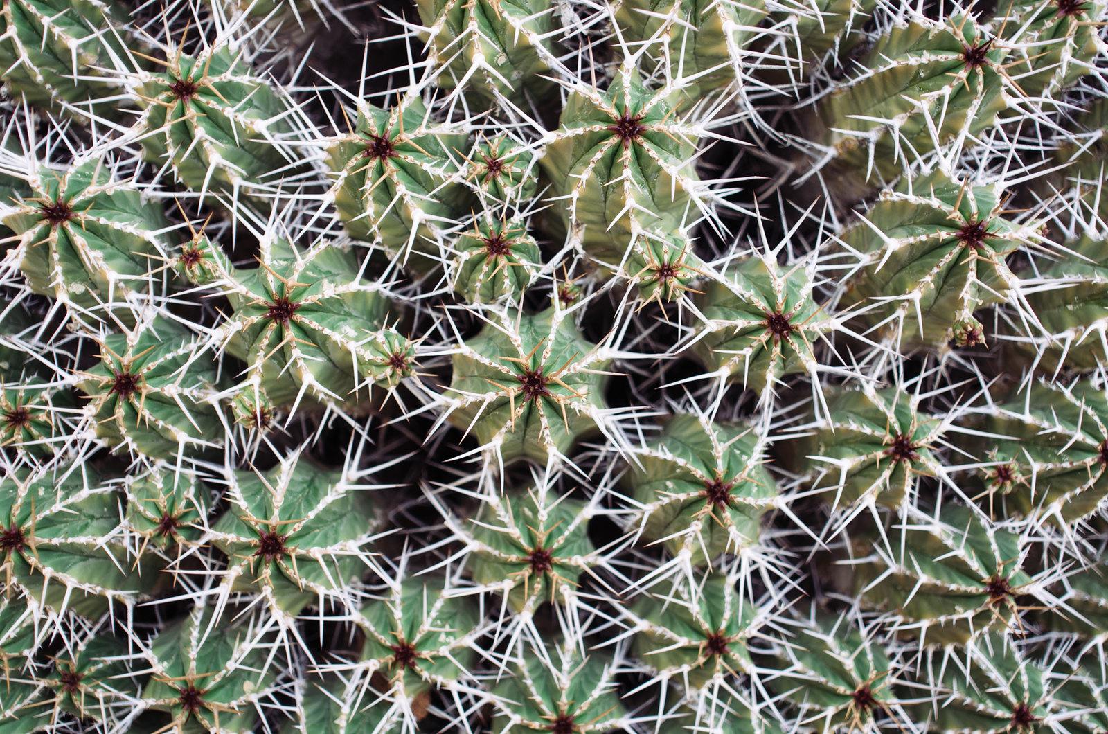 Amtoudi, anti-Atlas - 5 jours de trek au Maroc - Les cactus