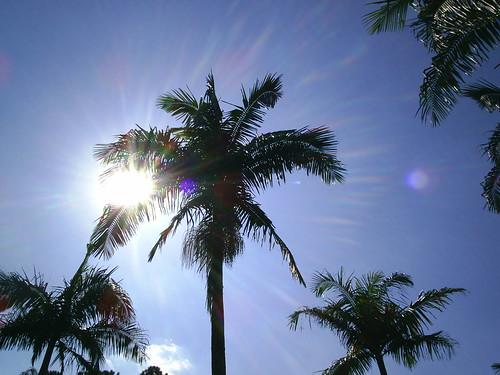 sunlight_palm_trees