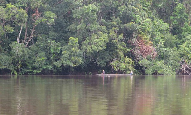 riverine forest Lomami 4