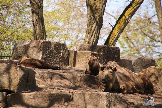 Tierpark Berlin 05.05.2016  083
