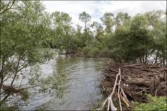Courlon sur Yonne 89 : Les conséquences de la dernière crue (prés du barrage)