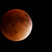 Blood Moon Eclipse - 2nd Place Events - Virginia Staat