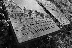St Andrew's churchyard 5