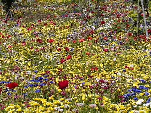三日山の花たち by leicadaisuki