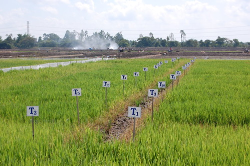 food asia rice farmers farming delta security vietnam research change southeast agriculture climate mekong clues irri ccafs amkn cgiarclimate