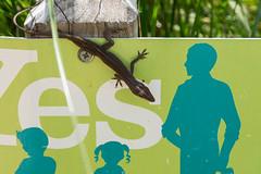 Lizard sign