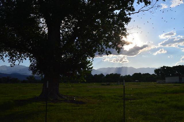 Field, flock of birds