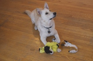 Balki with Skinneeez Plush Fox and Bird