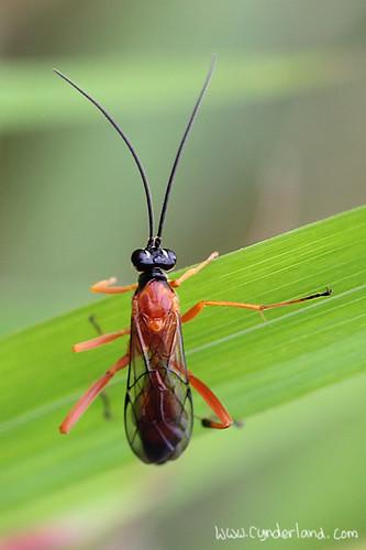 Bug n Pattern