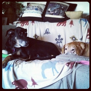 My girls #dobermanmix #houndmix #dogstagram #love