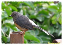 Bird2_60crop_p (1)