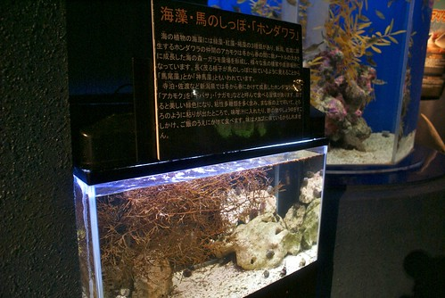 寺泊水族博物館2013