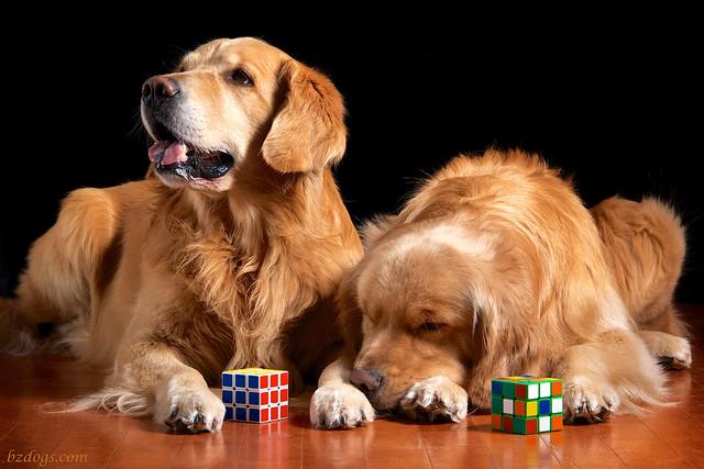 Puzzle Pups