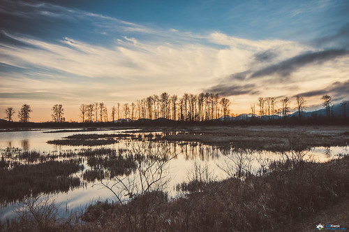 Sunsets over the Marsh