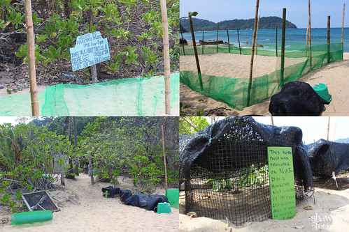 Nest Protection Juara Tioman