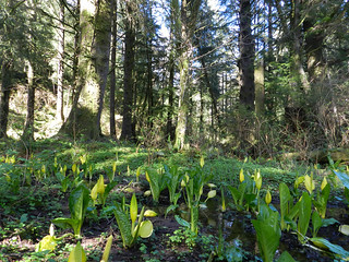 WetlandHwy101forest