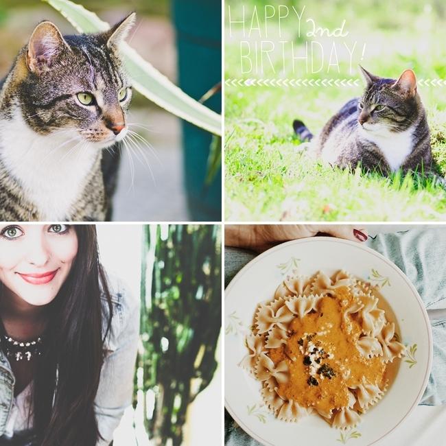 Selfie, Ramses, Katze angefahren, Katze gelähmt, Nudeln mit Paprika-Feta Sauce, Instagram