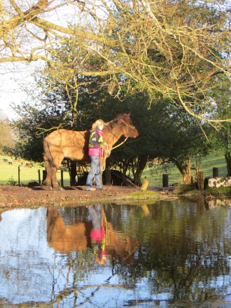 Reflecting Mule