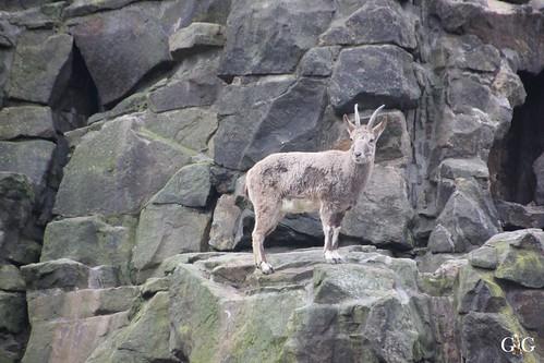 Sonntags Besuch im Zoo Berlin 25.01.2015 72