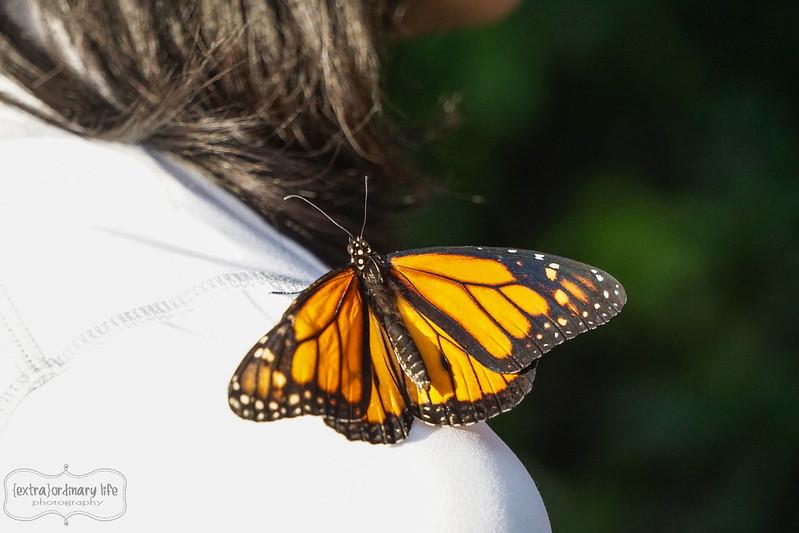 butterflies-1-wm