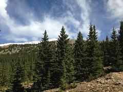 Santa Fe forest