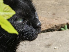 Soaking up the sunshine ...#catsofinstagram #blackcatsofinstagram #oneeyedcat