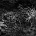 Hidden Grave