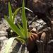 Iris in a Stump by cogdogblog