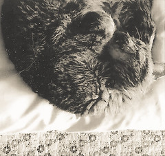 Rufus napping