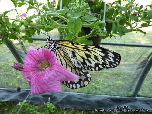 Nel Mondo delle Farfalle - Buono questo fiore