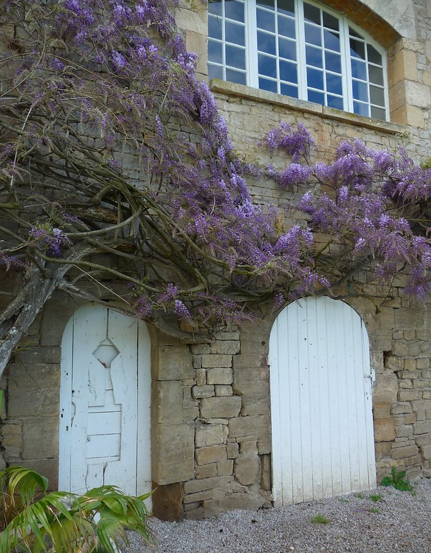 Wisteria and White Doors