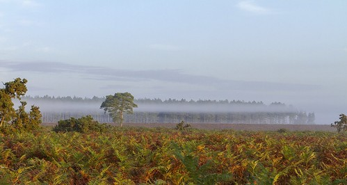 new uk trees england sky mist tree fog clouds forest sunrise landscape countryside heather hampshire newforest uploaded:by=flickrmobile flickriosapp:filter=nofilter