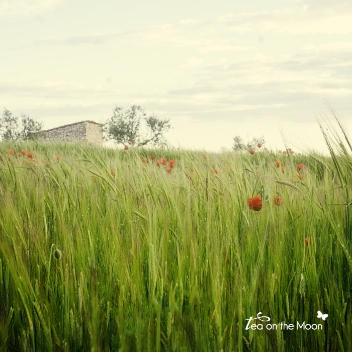 campos en primavera 04