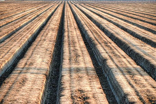 field dirt rows agriculture nikon1855 nikond5100