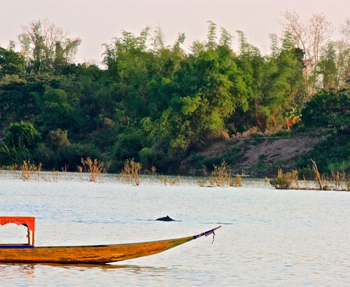 first Irrawaddy dolphin spotting