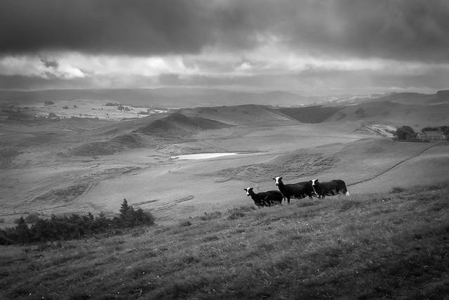 Welsh hillside